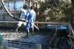 ベタ基礎の配筋が終わり、コンクリートを敷き込みます。